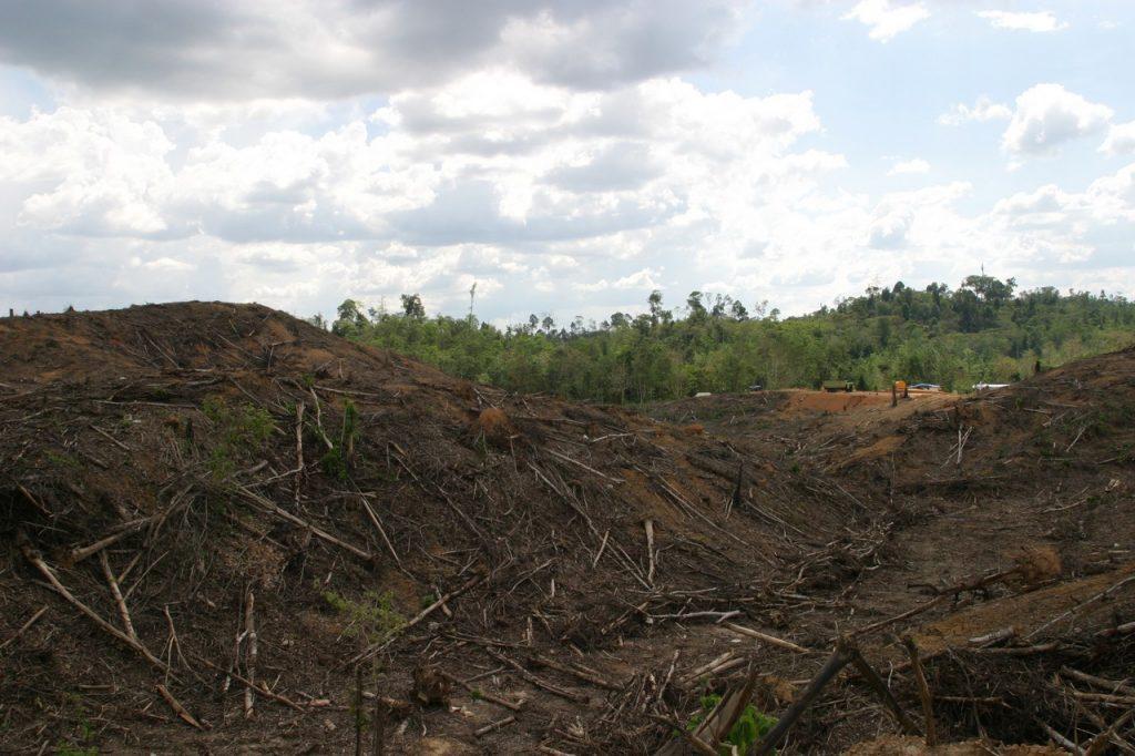 Zerstörter Regenwald