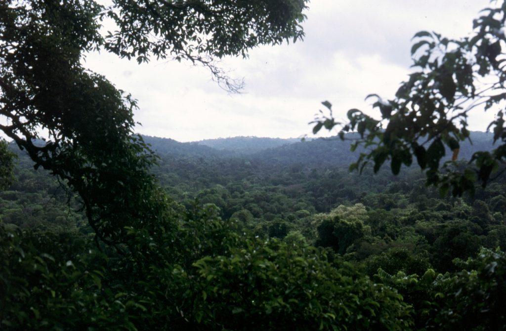Tieflandregenwald in Französisch-Guayana