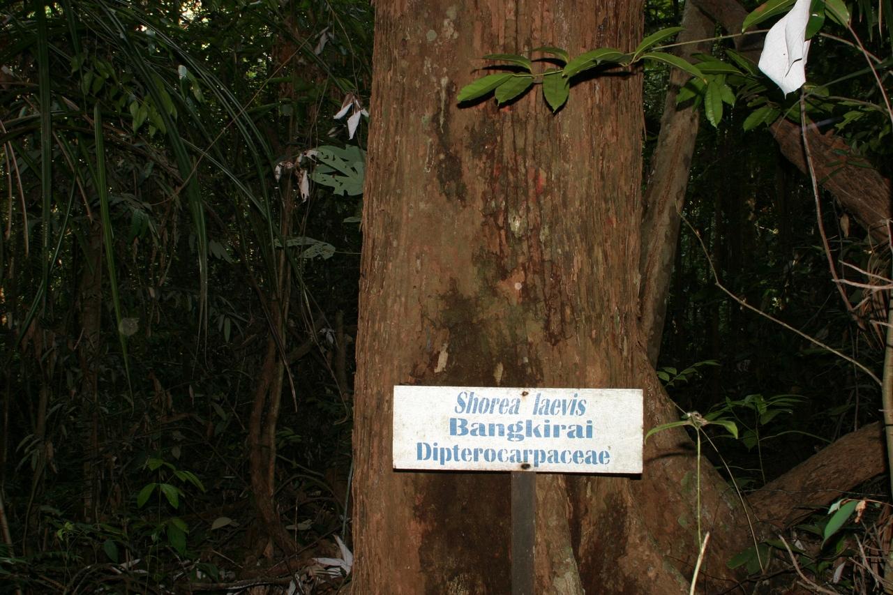 Tropenholz Bangkirai