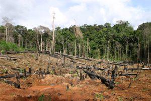 Brandrodung im tropischen Regenwald
