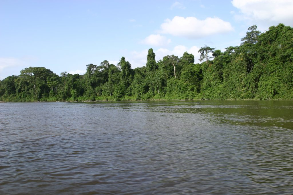 Ufer eines tropischen Regenwals