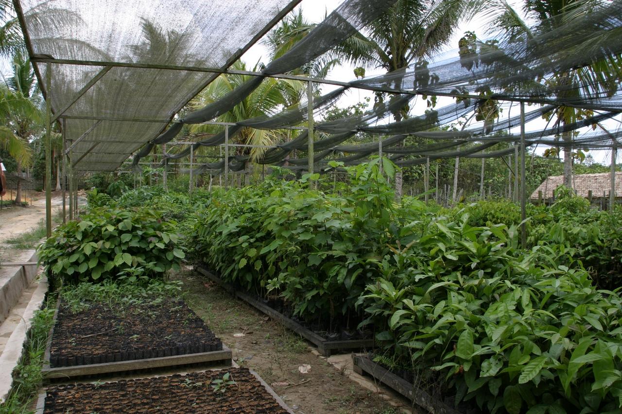 Gewächshäuser für Setzlinge zum Aufforsten des Regenwalds