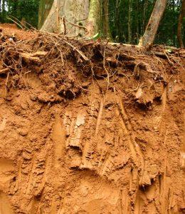 Querschnitt durch einen tropischen Boden