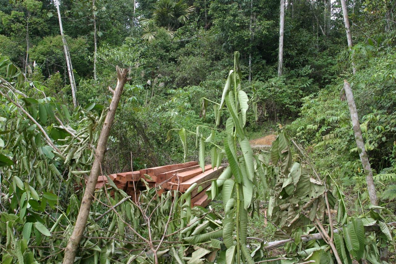 Illegal geschlagenes Tropenholz