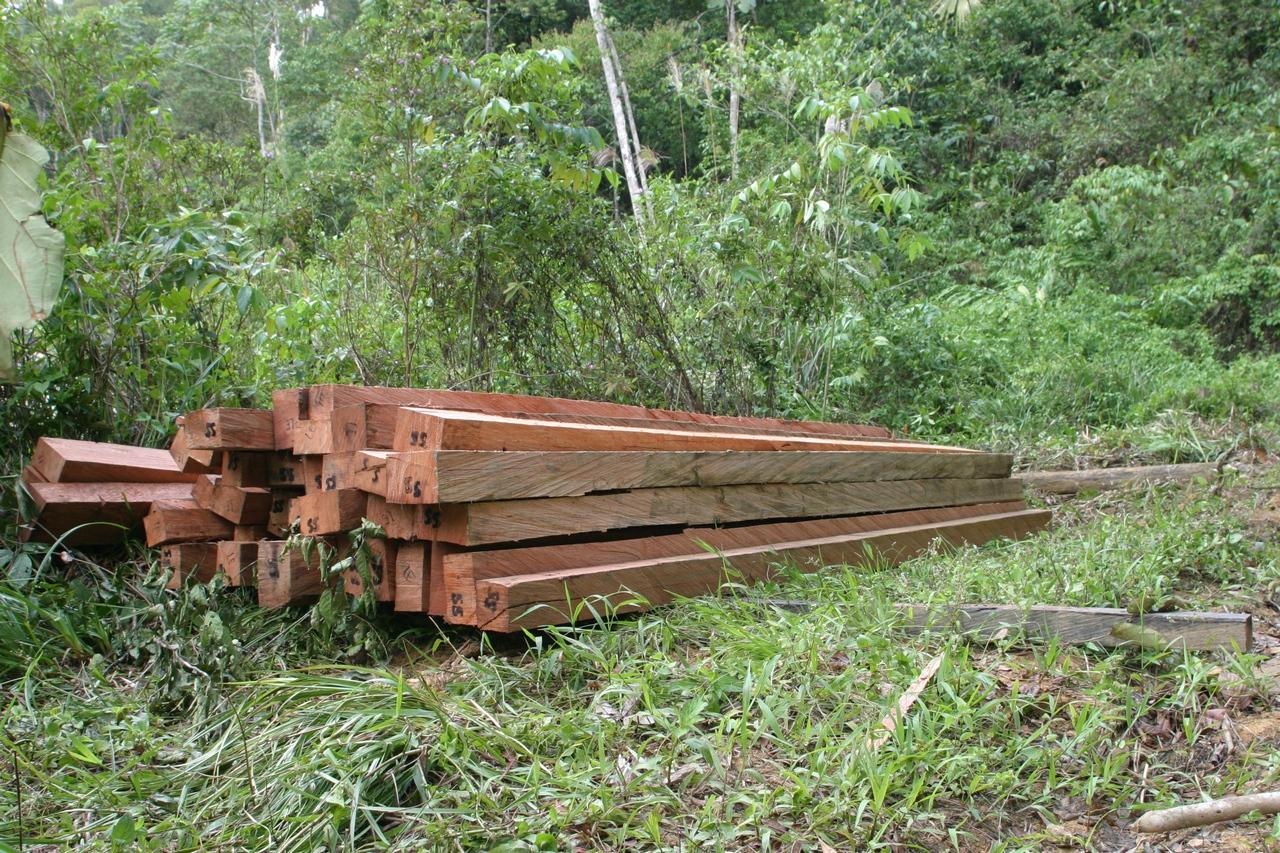 Illegales Tropenholz