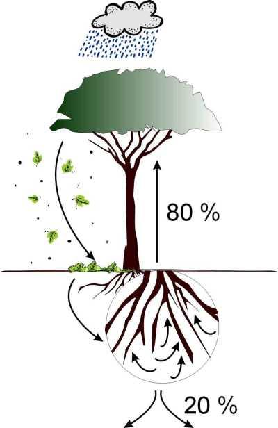 Grafik: der kurzgeschlossene Nährstoffkreislauf