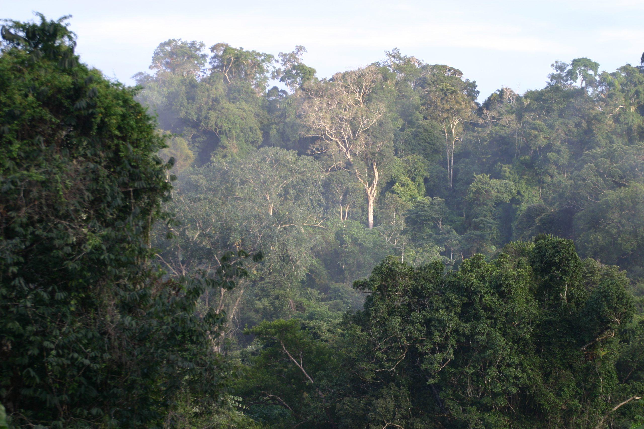 Stockwerkbau im Regenwald