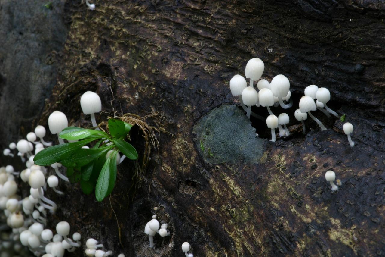 Pilze im Regenwald