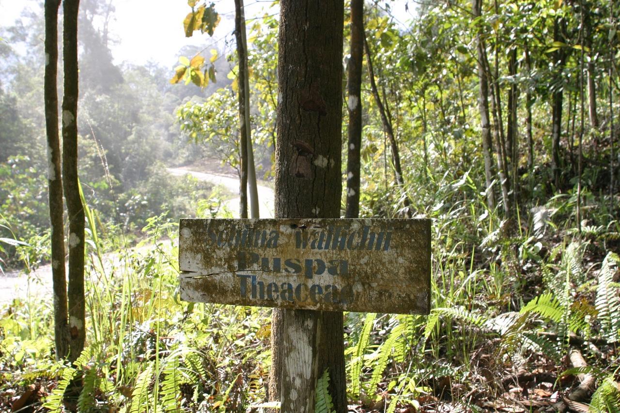 Tropenholz Puspa