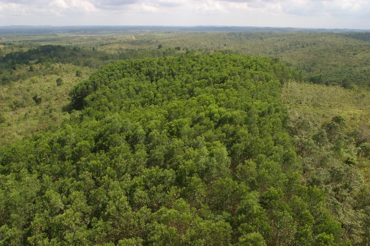 Aufgeforsteter Regenwald