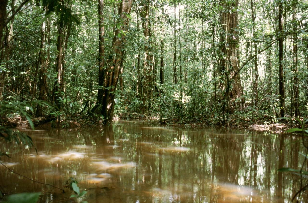 Wasser im überschwemmten Regenwald