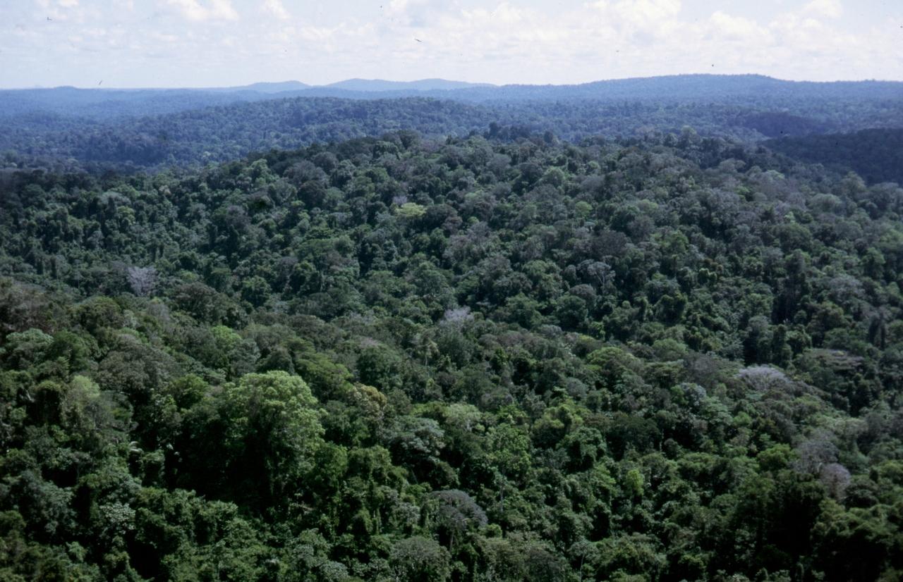 Der Regenwald aus der Vogelperspektive