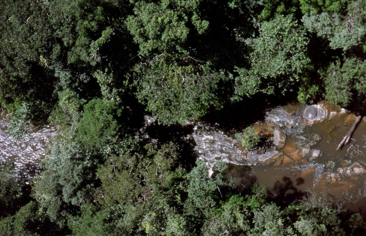 Der Regenwald aus der Luft