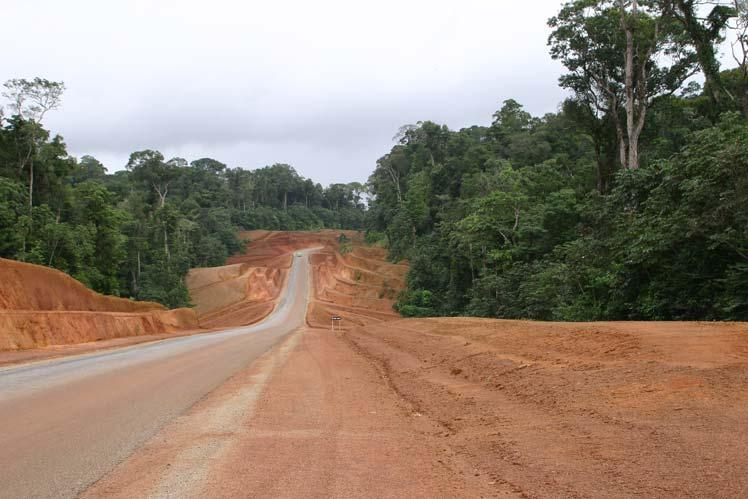 Straßenbau im Regenwald