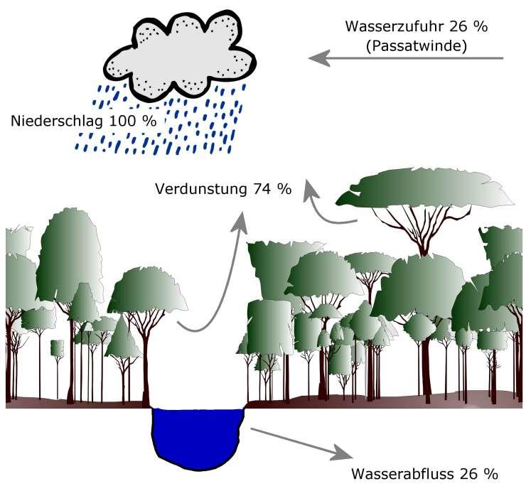 Grafik: Wasserkreislauf in Amazonien