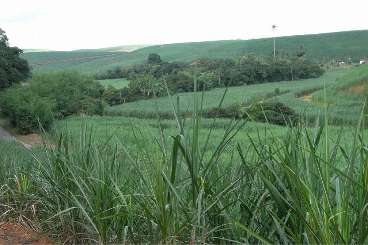 Zuckerrohplantage