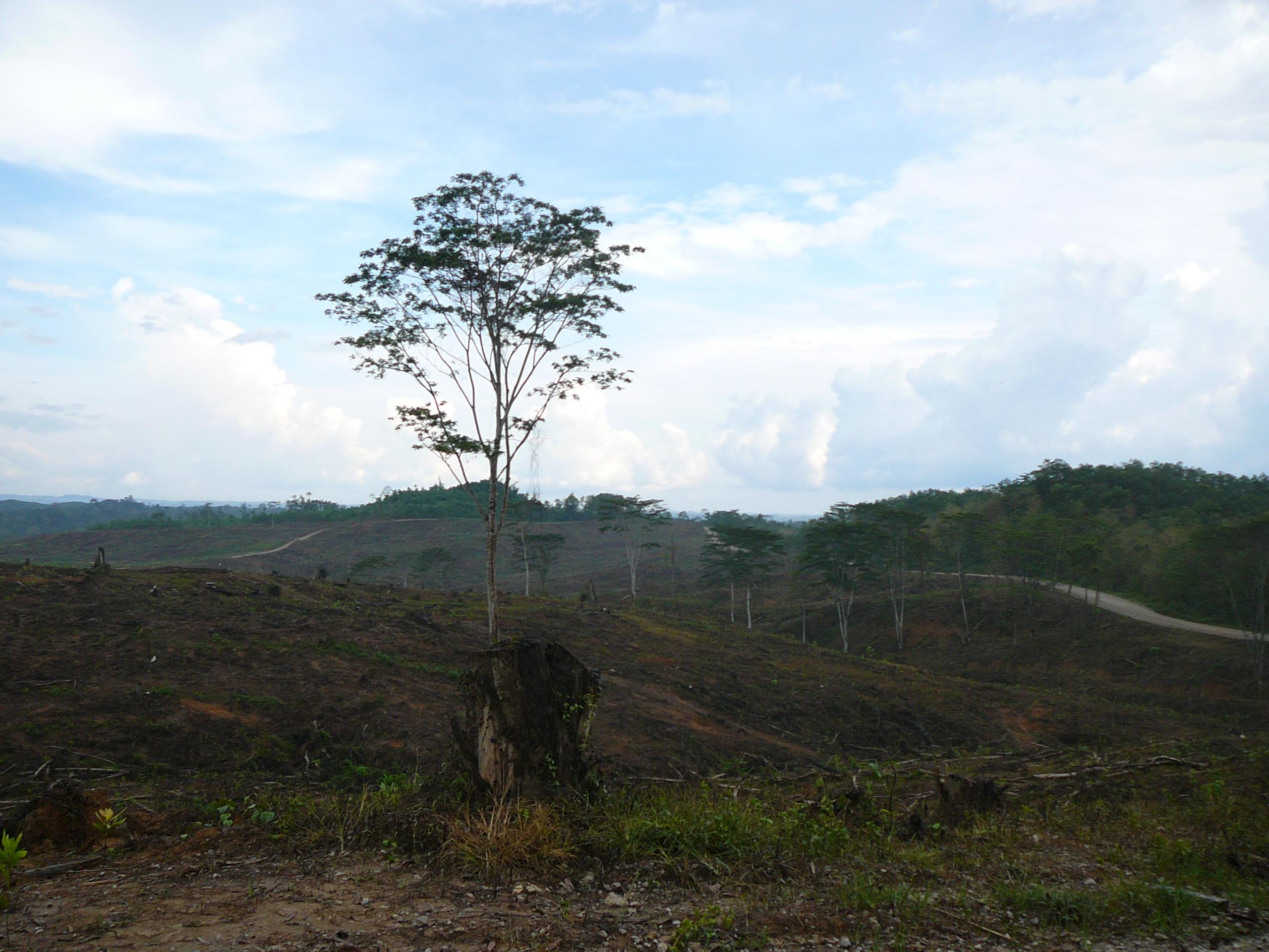 Regenwaldzerstörung Borneo