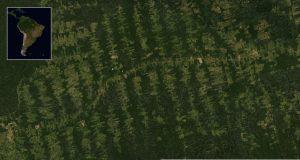 Satellitenbild: Fischgrätenmuster entlang der Transamazonica (BR 230)
