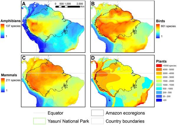 Grafik: Yasuni Artenvielfalt