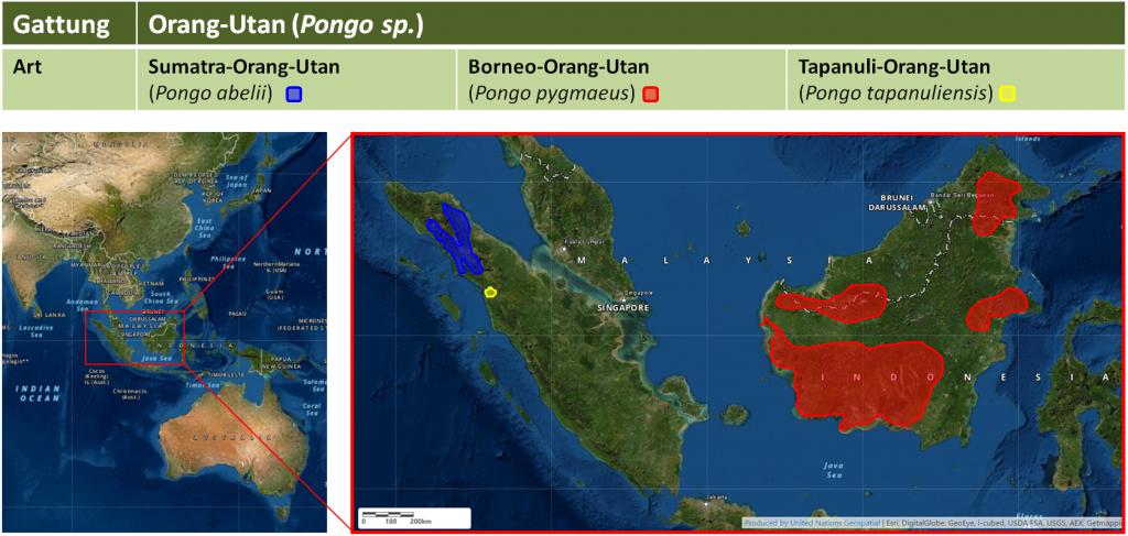 Orang-Utan: Arten und Verbreitung