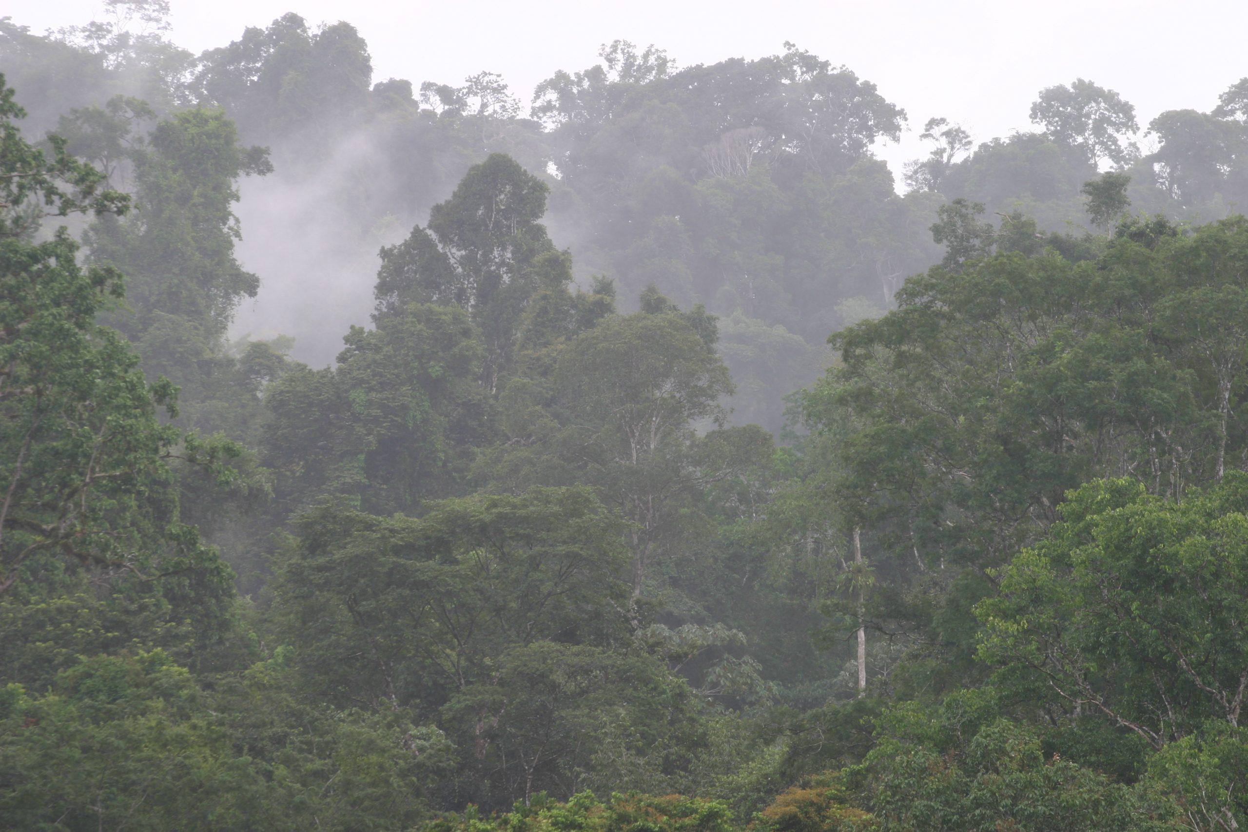 Regenwald im Nebel