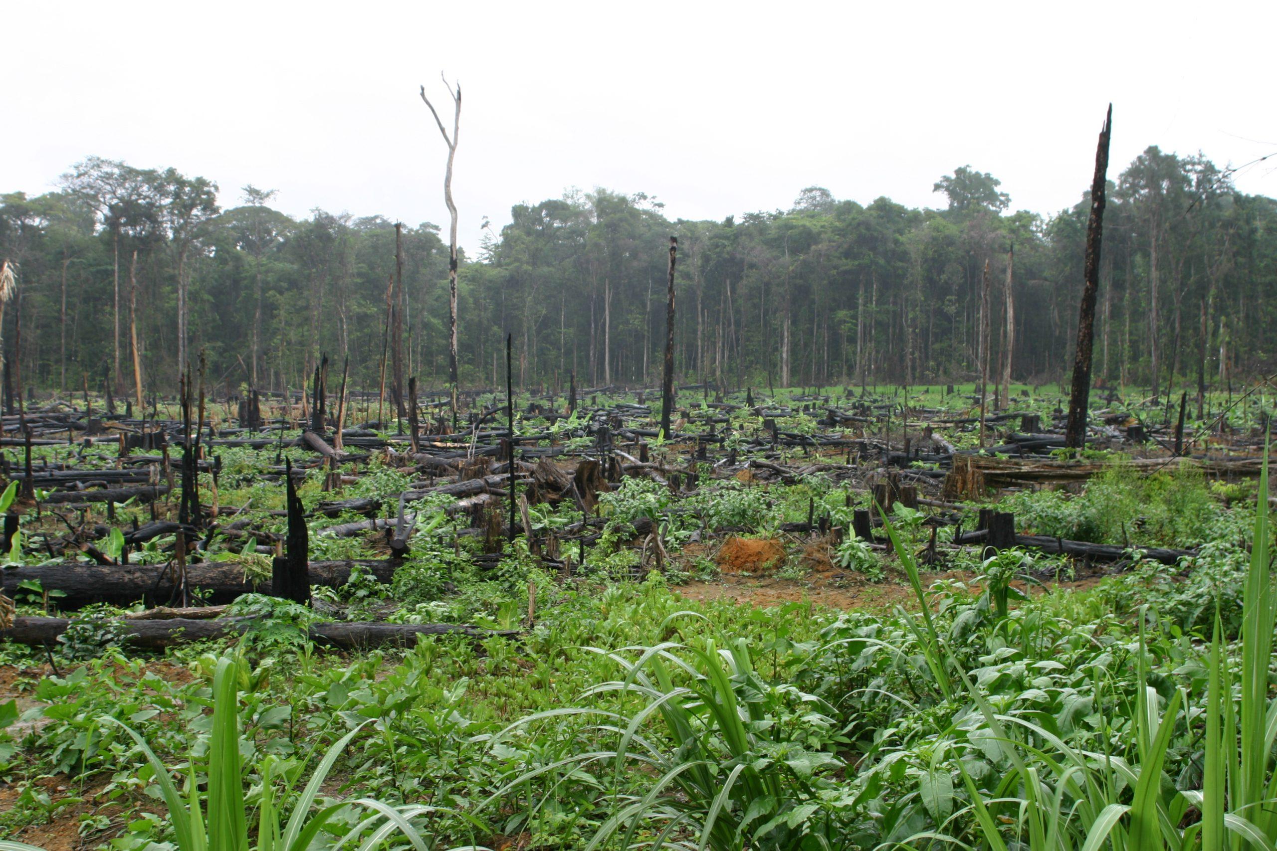 Regenwaldzerstörung in Französisch-Guayana