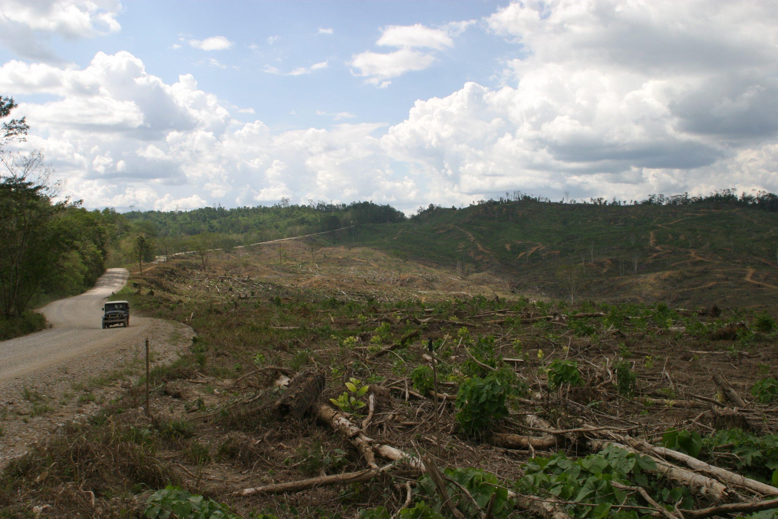 Straßenbau und Regenwaldzerstörung in Indonesien (Borneo)